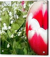 Colorful Tulip Acrylic Print by Jose Lopez