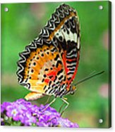 Colorful Wing Acrylic Print