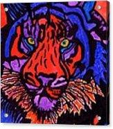 Colorfull Tiger Acrylic Print