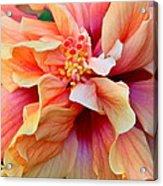 Coloring Book Hibiscus Acrylic Print