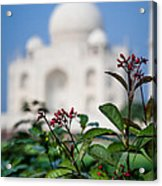 Colors Around The Taj Mahal Acrylic Print