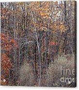 Colors Galore Acrylic Print