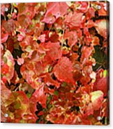 Colors Of Autumn Acrylic Print