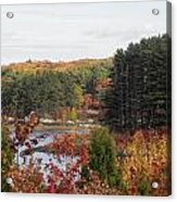 colors of fall in New England Acrylic Print