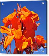 Colors Of Summer Acrylic Print