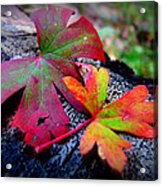 Colors Of The Autumn Forest Acrylic Print
