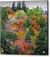 Colors Of The Sandia Forest Acrylic Print