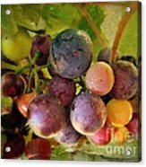 Colors Of Wine Acrylic Print