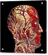 Colour Artwork Of Nerve & Blood Supply Of Head Acrylic Print