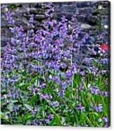 Colour Purple Acrylic Print