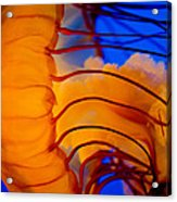 Colours Of The Jelly Fish 3 Acrylic Print