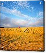 Combine Harvesting, Wheat, Ireland Acrylic Print