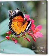 Common Lacewing Acrylic Print