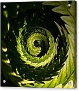 Common Polypody Swirl Acrylic Print