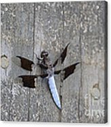Common White Tail Dragonfly Acrylic Print