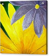 Complementary Blossoms  Acrylic Print