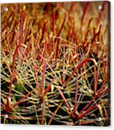 Complexity Of Nature Acrylic Print