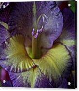 Complimentary Colors Acrylic Print