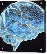 Computer Artwork Of A Wire-frame Model Of A Brain Acrylic Print