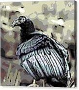 Condor Profile Acrylic Print