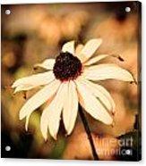 Cone Flower Grunge Acrylic Print