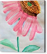 Coneflower - Watercolor Acrylic Print