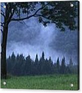 Coniferous Trees Early In The Morning Acrylic Print