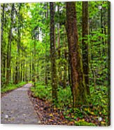 Conkle's Hollow State Park Acrylic Print