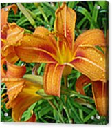Consider The Lilies Of  The Field - Hemerocallis Fulva Acrylic Print