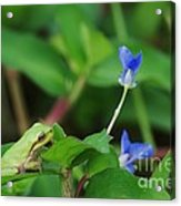 Contemplating Blue Acrylic Print by Don Youngclaus