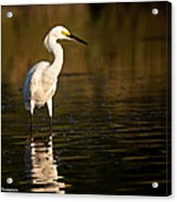 Cool Bird Acrylic Print
