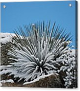 Cool Cacti Acrylic Print