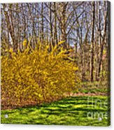 Cool Day Of Spring Acrylic Print