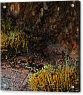 Copper And Gold Acrylic Print