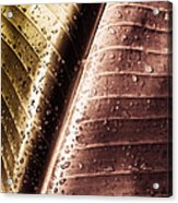 Copper Raindrops Acrylic Print