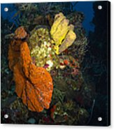 Coral And Sponge Reef, Belize Acrylic Print