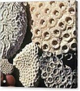 Coral Cobbles On Beach Of Bonaire Acrylic Print