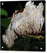 Coral Mushroom 2 Acrylic Print