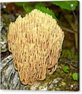Coral Mushroom Acrylic Print