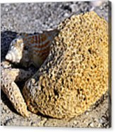 Coral On Shore Acrylic Print