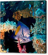 Coral Reef In Red Sea Acrylic Print