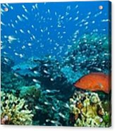 Coral Reef In Thailand Acrylic Print