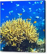 Coral Reef Acrylic Print