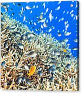 Coral Reef Panorama Acrylic Print
