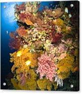 Coral Reef Seascape, Australia Acrylic Print