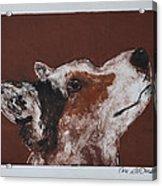 Corgi's High Alert Acrylic Print
