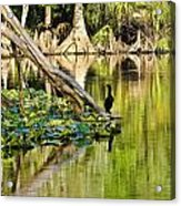 Cormorant On The River Acrylic Print