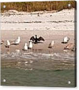 Cormorant Stands Out Acrylic Print