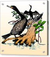 Cormorants On Mangrove Stumps Filtered Acrylic Print