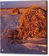 Corn Bales At Sunset, Dugald, Manitoba Acrylic Print